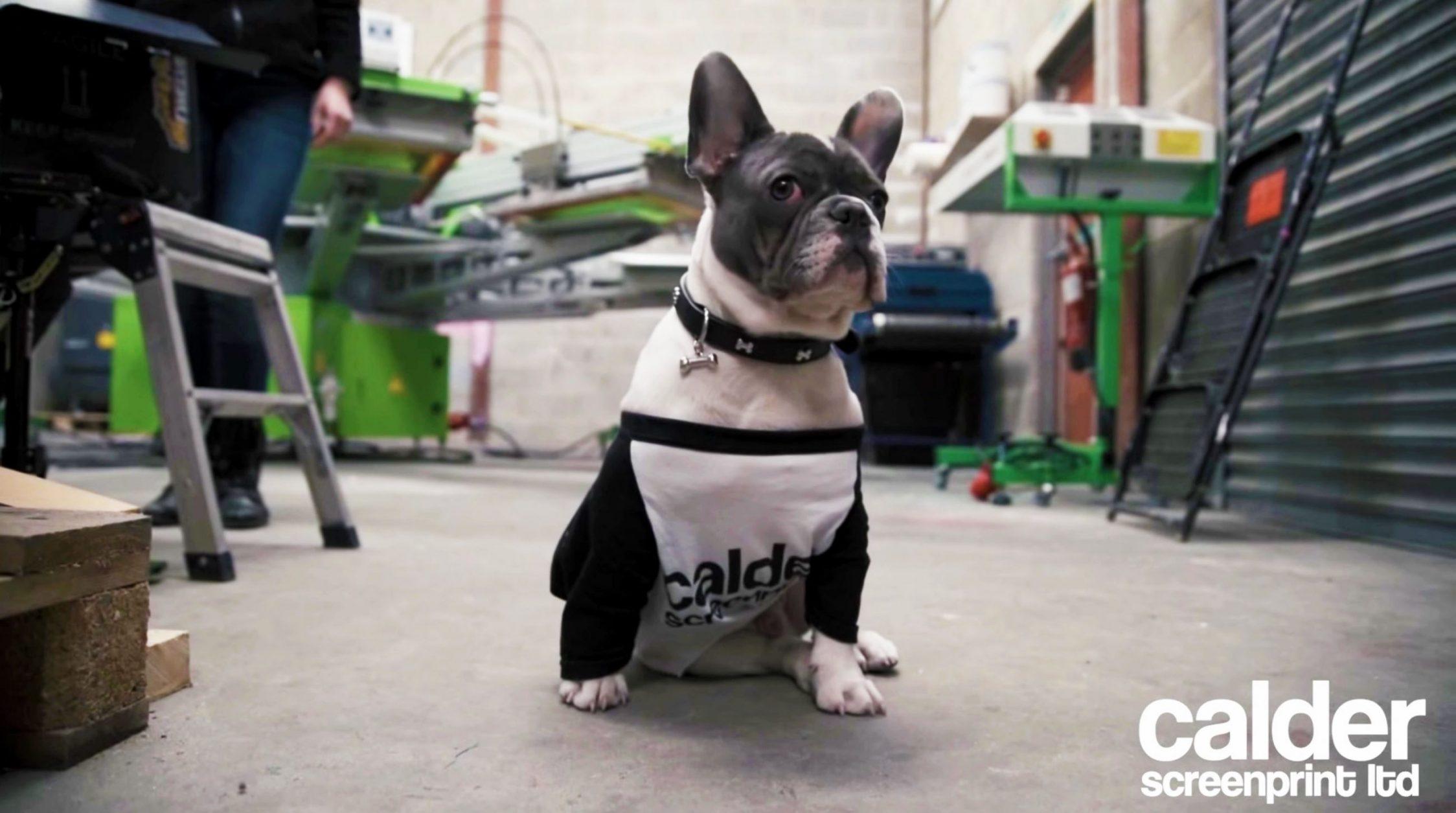 dog1 - Web design for screen printing company
